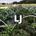 Lilla Jordbruket i Bergum ekonomisk fören logotyp